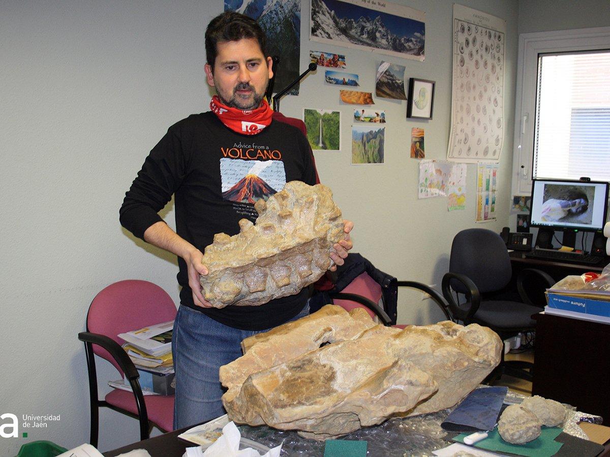 UJA fósiles